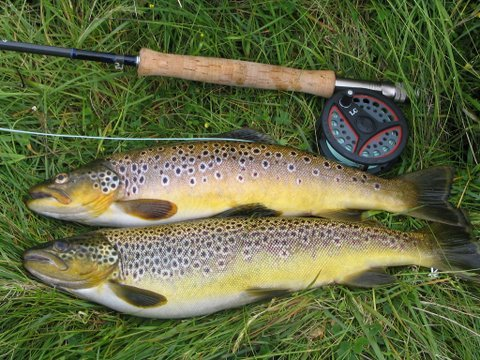 Typical Craggie trout caught by Brian Stapleton